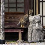 岩合光昭写真展「ねこの京都」開催!