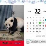 「パンダ記念日カレンダー入りクリアファイル」<br>プレゼント