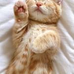 「だいにゃる猫の写真展」作品募集