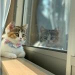 「第2回 だいにゃる猫の写真展」