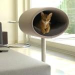 『世界で一番美しい猫の図鑑』写真展