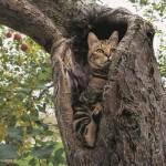 岩合光昭写真展「ふるさとのねこ」渋谷ヒカリエ  津軽の四季、子ネコたちの物語。